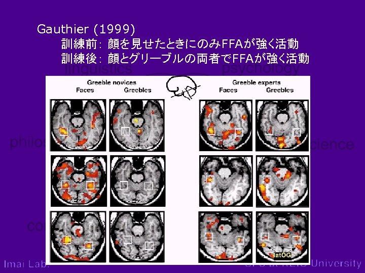 Gauthier (1999)    訓練前: 顔を見せたときにのみFFAが強く活動    訓練後: 顔とグリーブルの両者でFFAが強く活動