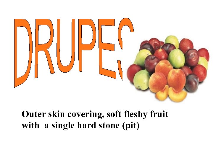 Outer skin covering, soft fleshy fruit with a single hard stone (pit)