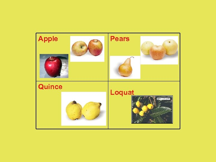 Apple Quince Pears Loquat