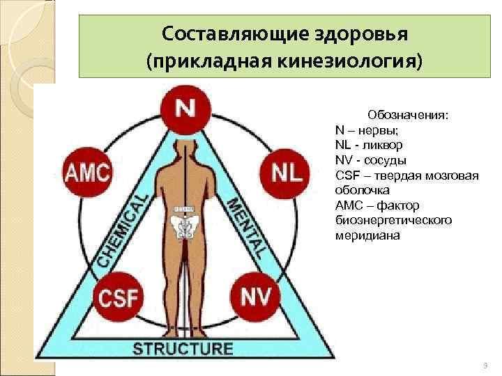 Составляющие здоровья (прикладная кинезиология) Обозначения: N – нервы; NL - ликвор NV - сосуды
