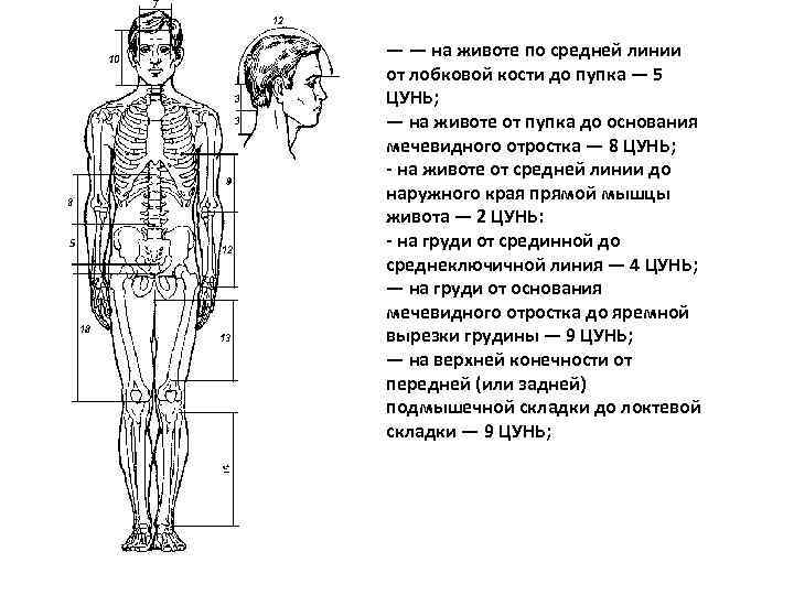 — — на животе по средней линии от лобковой кости до пупка — 5