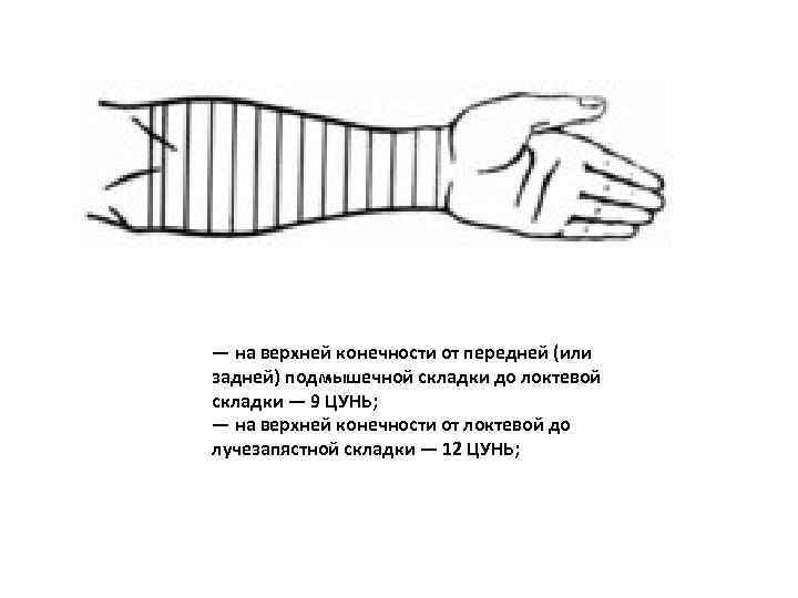 — на верхней конечности от передней (или задней) подмышечной складки до локтевой складки —
