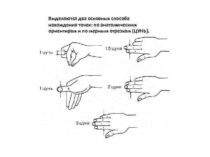 Выделяются два основных способа нахождения точек: по анатомическим ориентирам и по мерным отрезкам (ЦУНЬ).