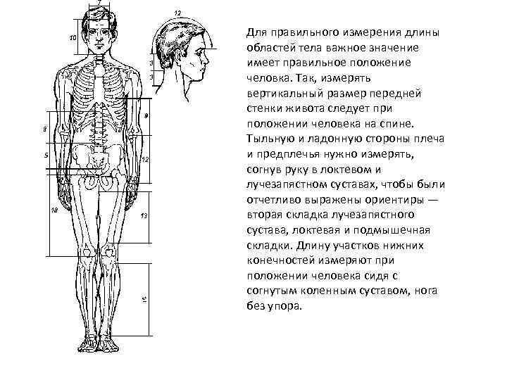 Для правильного измерения длины областей тела важное значение имеет правильное положение человка. Так, измерять