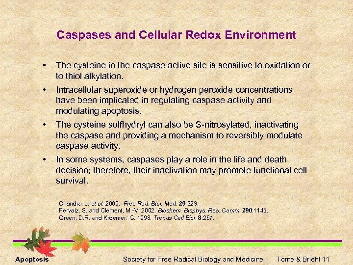 Caspases and Cellular Redox Environment • The cysteine in the caspase active site is