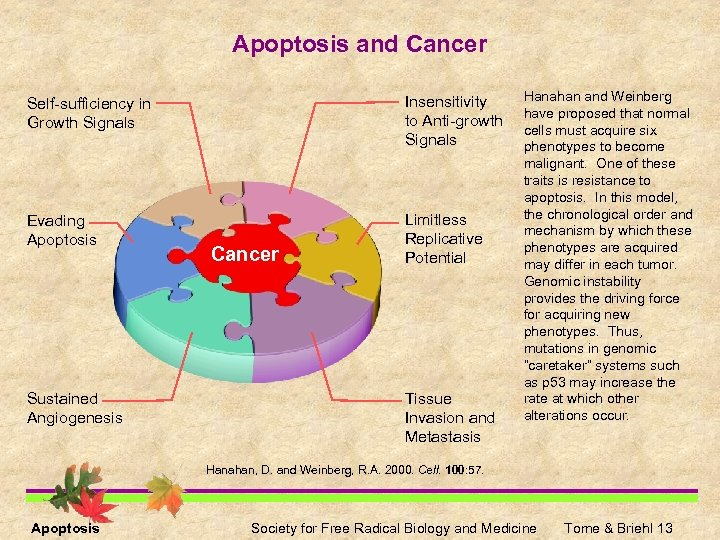 Apoptosis and Cancer Self-sufficiency in Growth Signals Insensitivity to Anti-growth Signals Evading Apoptosis Limitless