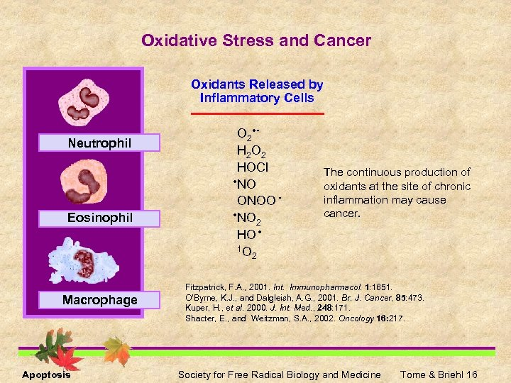 Oxidative Stress and Cancer Oxidants Released by Inflammatory Cells Neutrophil Eosinophil Macrophage Apoptosis O