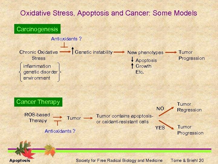 Oxidative Stress, Apoptosis and Cancer: Some Models Carcinogenesis Antioxidants ? Chronic Oxidative Stress Genetic