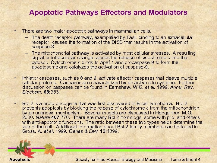Apoptotic Pathways Effectors and Modulators • There are two major apoptotic pathways in mammalian
