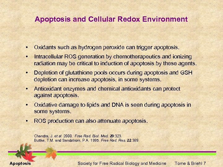 Apoptosis and Cellular Redox Environment • Oxidants such as hydrogen peroxide can trigger apoptosis.