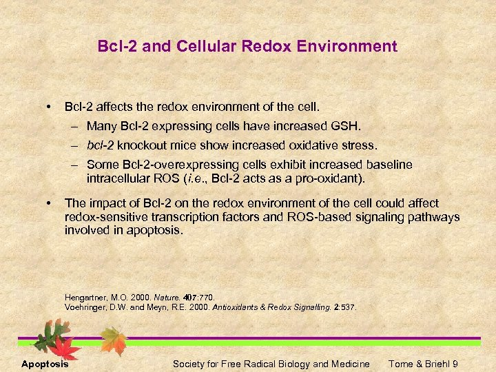 Bcl-2 and Cellular Redox Environment • Bcl-2 affects the redox environment of the cell.