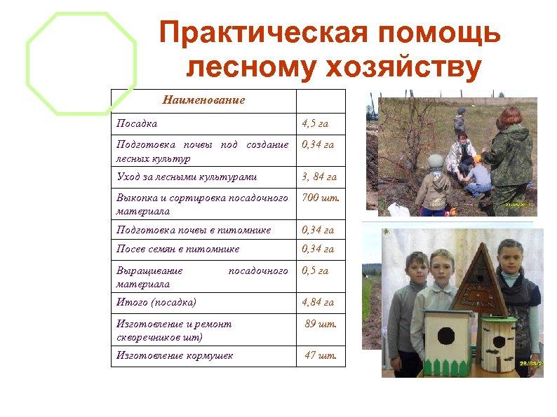 Практическая помощь лесному хозяйству Наименование Посадка 4, 5 га Подготовка почвы под создание лесных