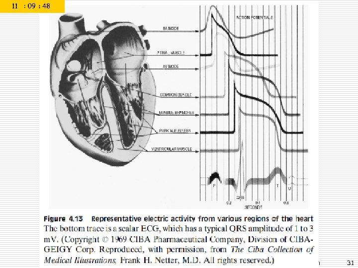 Prof. Dr. Sezgin ALSAN Biyomedikal Enstrümantasyon 31
