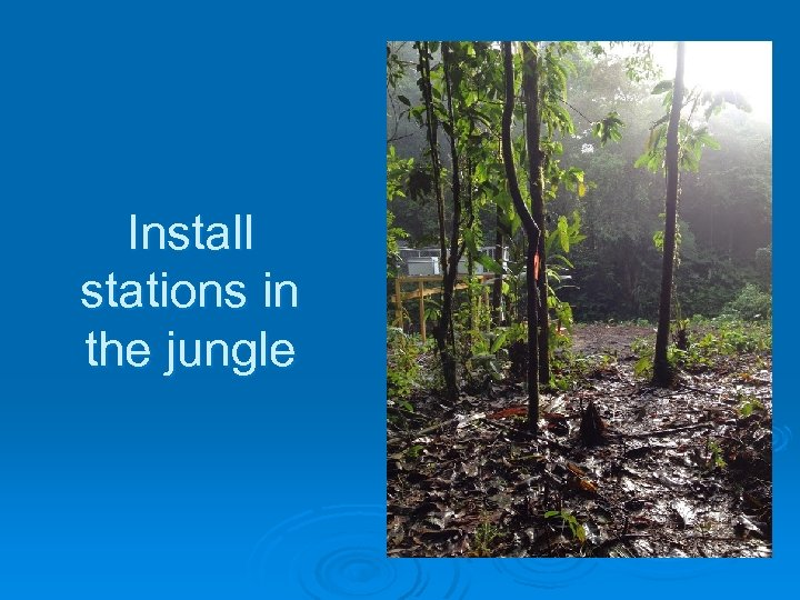 Install stations in the jungle