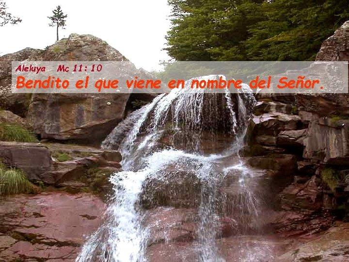 Aleluya Mc 11: 10 Bendito el que viene en nombre del Señor.
