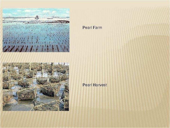 Pearl Farm Pearl Harvest