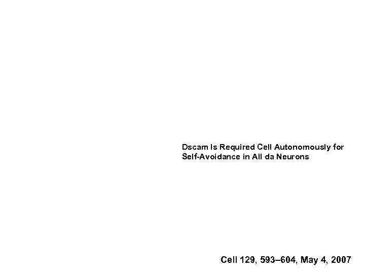 Dscam Is Required Cell Autonomously for Self-Avoidance in All da Neurons Cell 129, 593–