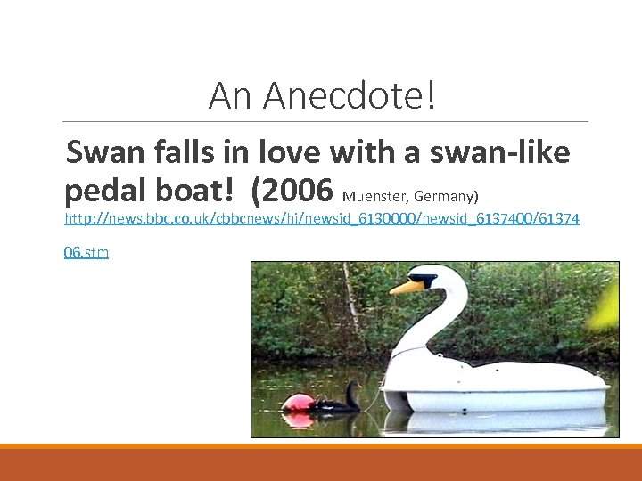 An Anecdote! Swan falls in love with a swan-like pedal boat! (2006 Muenster, Germany)