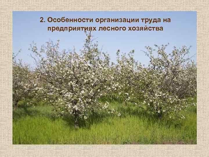2. Особенности организации труда на предприятиях лесного хозяйства