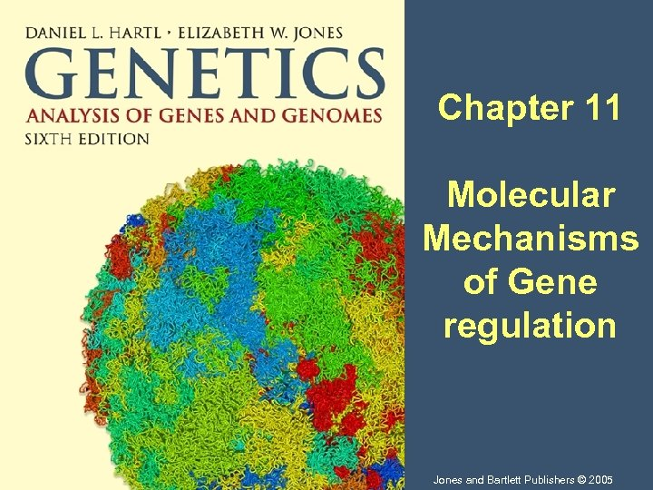Chapter 11 Molecular Mechanisms of Gene regulation Jones and Bartlett Publishers © 2005