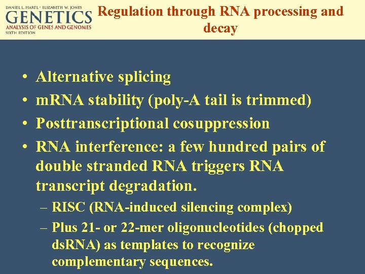 Regulation through RNA processing and decay • • Alternative splicing m. RNA stability (poly-A