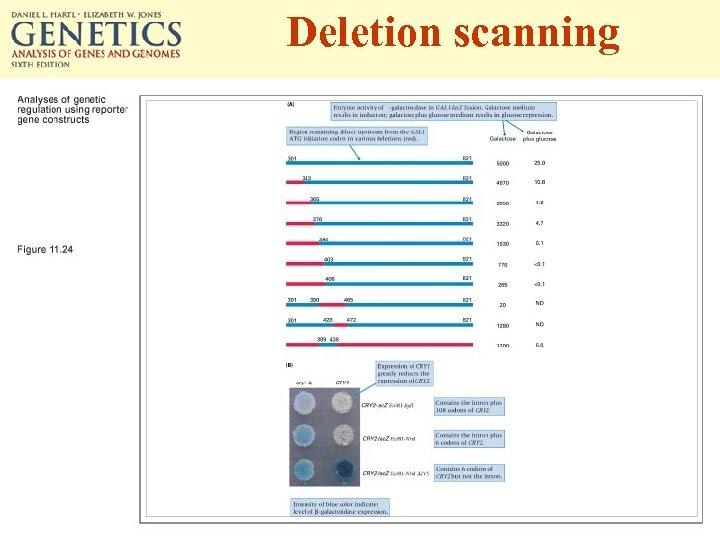 Deletion scanning