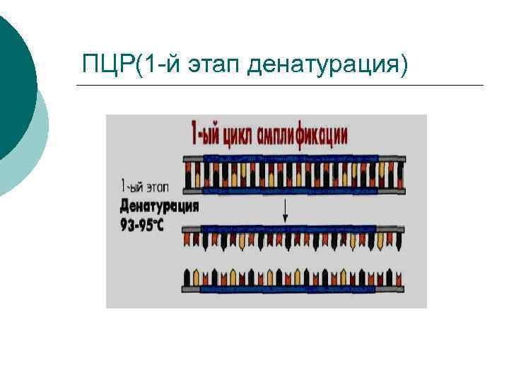 ПЦР(1 -й этап денатурация)