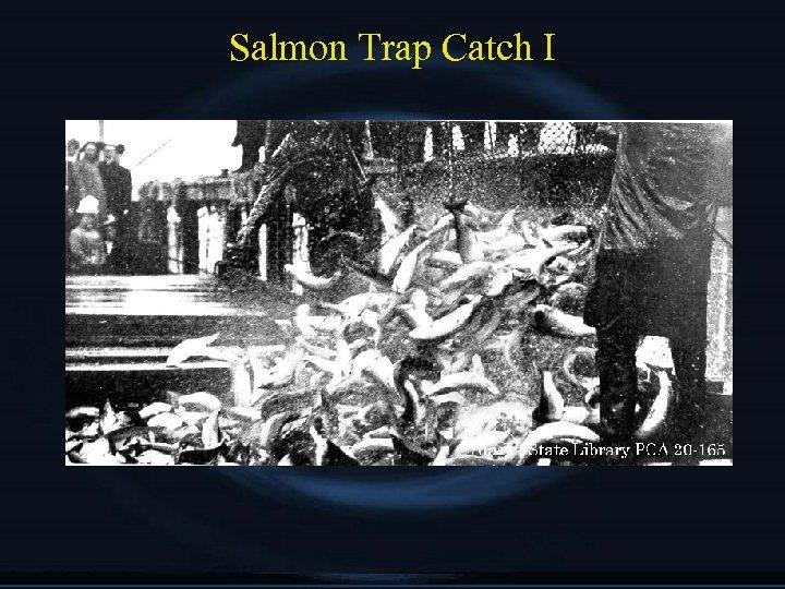 Salmon Trap Catch I