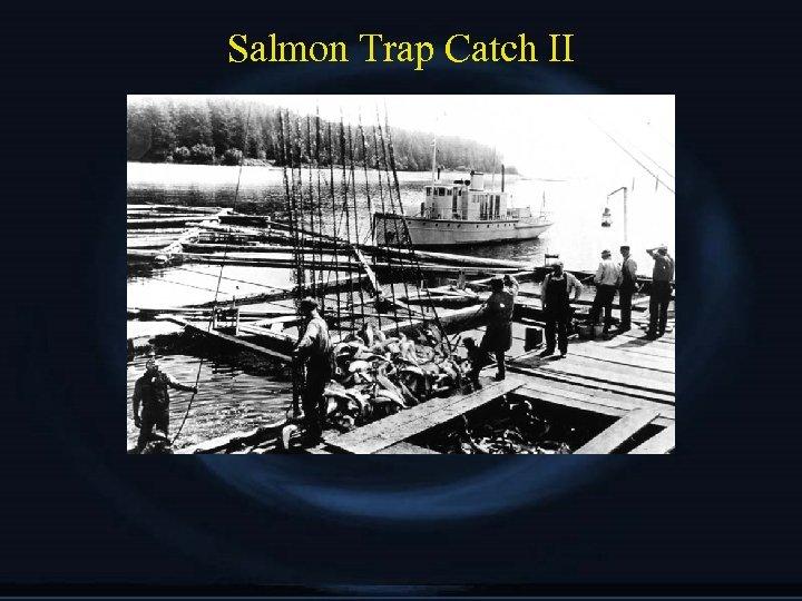 Salmon Trap Catch II