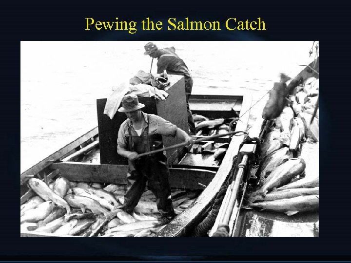 Pewing the Salmon Catch