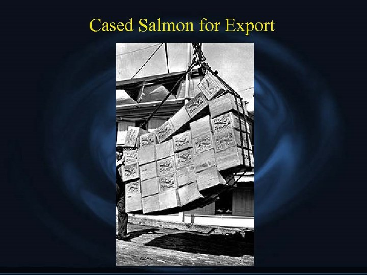 Cased Salmon for Export