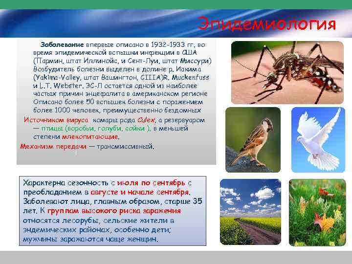 Эпидемиология Заболевание впервые описано в 1932 -1933 гг. во время эпидемической вспышки инфекции в