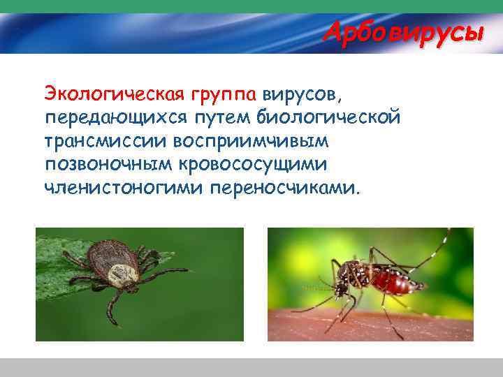 Арбовирусы Экологическая группа вирусов, передающихся путем биологической трансмиссии восприимчивым позвоночным кровососущими членистоногими переносчиками.