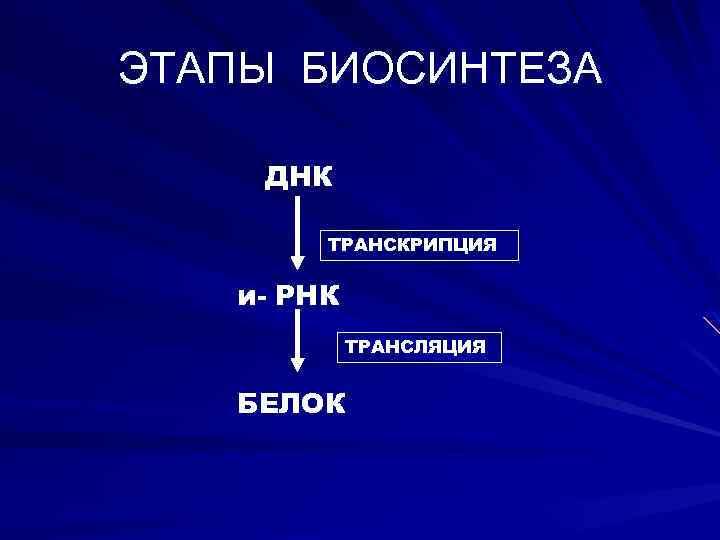 ЭТАПЫ БИОСИНТЕЗА ДНК ТРАНСКРИПЦИЯ и- РНК ТРАНСЛЯЦИЯ БЕЛОК