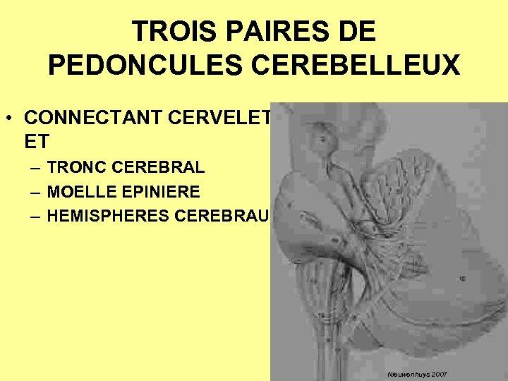 TROIS PAIRES DE PEDONCULES CEREBELLEUX • CONNECTANT CERVELET ET – TRONC CEREBRAL – MOELLE