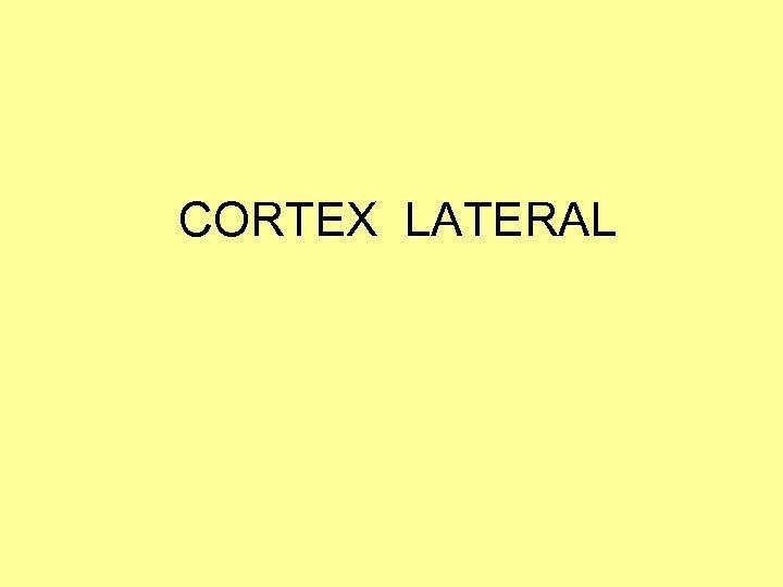 CORTEX LATERAL