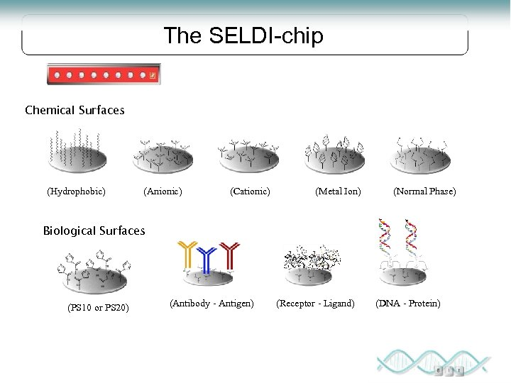 The SELDI-chip Chemical Surfaces (Hydrophobic) (Anionic) (Cationic) (Metal Ion) (Normal Phase) Biological Surfaces (PS