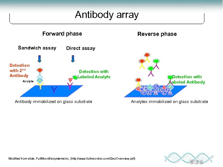 Antibody array Forward phase Sandwich assay Detection with 2 nd Antibody Reverse phase Direct