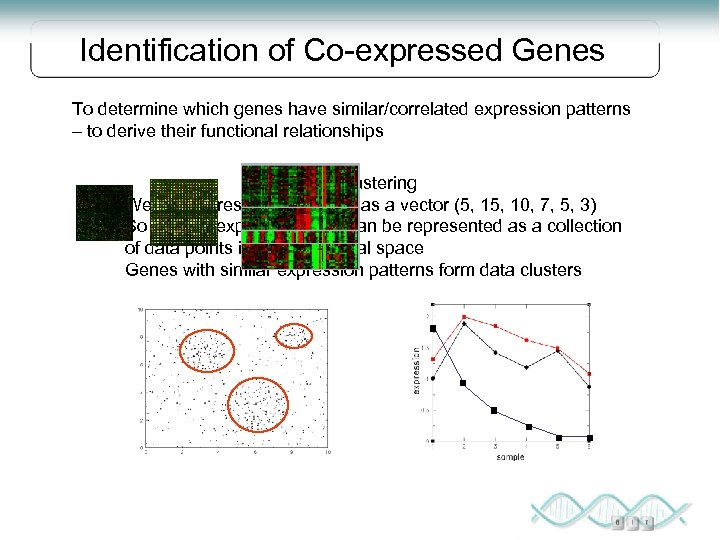 Identification of Co-expressed Genes To determine which genes have similar/correlated expression patterns – to