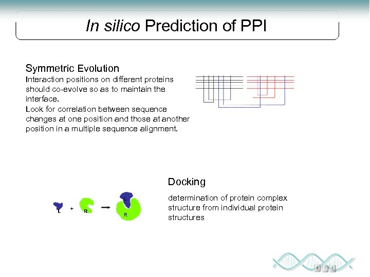 In silico Prediction of PPI Symmetric Evolution Interaction positions on different proteins should co-evolve