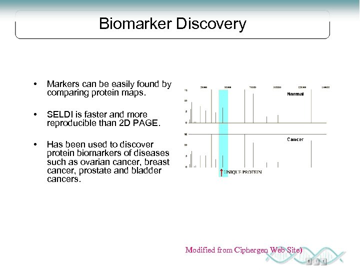 Biomarker Discovery • Markers can be easily found by comparing protein maps. • SELDI