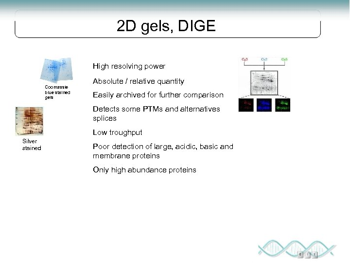 2 D gels, DIGE High resolving power Coomassie blue stained gels Absolute / relative