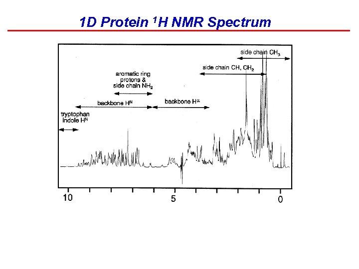 1 D Protein 1 H NMR Spectrum