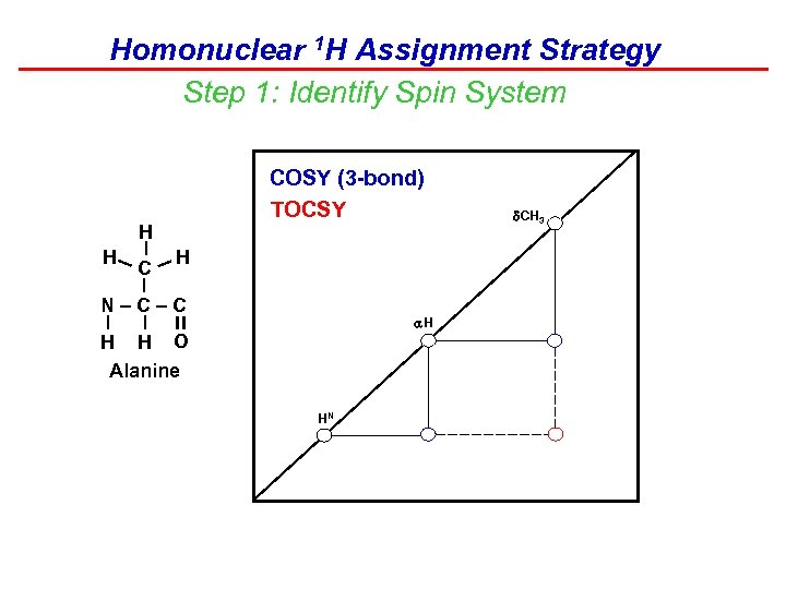 Homonuclear 1 H Assignment Strategy Step 1: Identify Spin System COSY (3 -bond) TOCSY