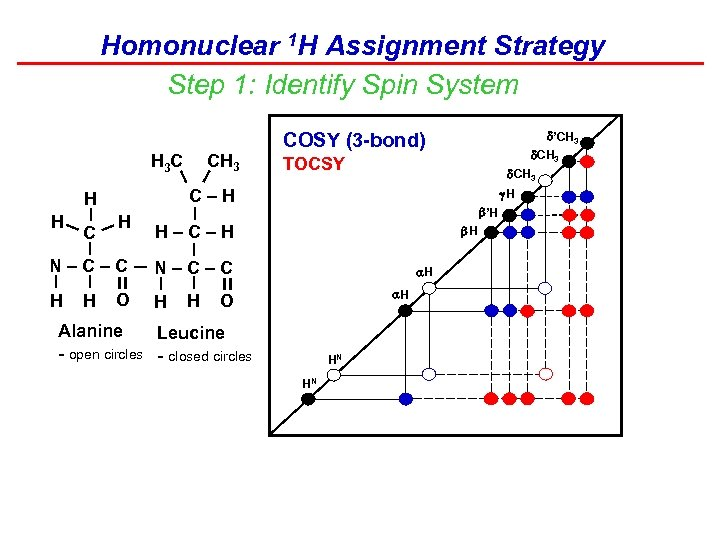 Homonuclear 1 H Assignment Strategy Step 1: Identify Spin System CH 3 –H H
