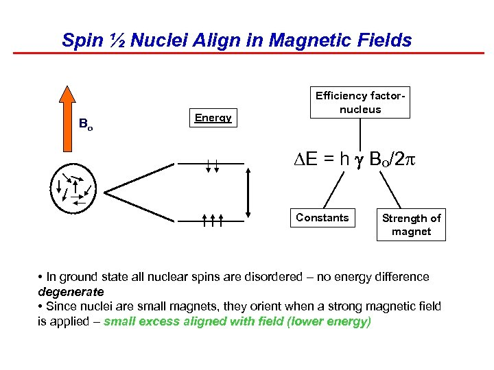 Spin ½ Nuclei Align in Magnetic Fields Bo Energy Efficiency factornucleus DE = h