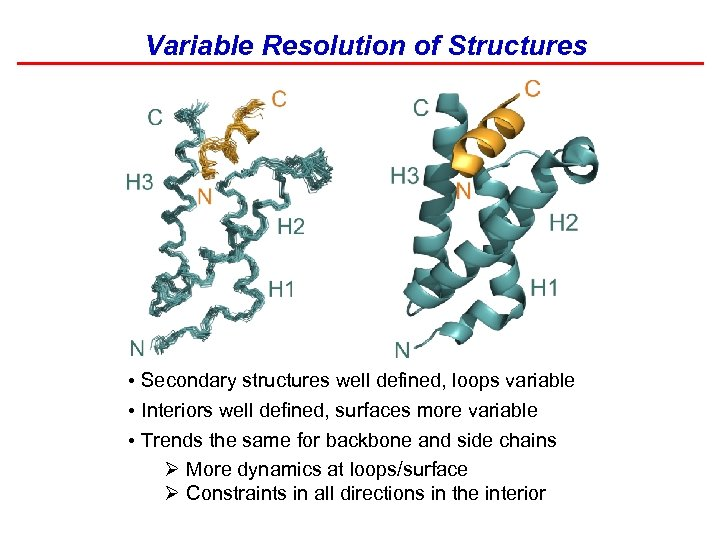 Variable Resolution of Structures • Secondary structures well defined, loops variable • Interiors well