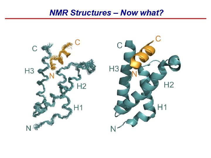 NMR Structures – Now what?