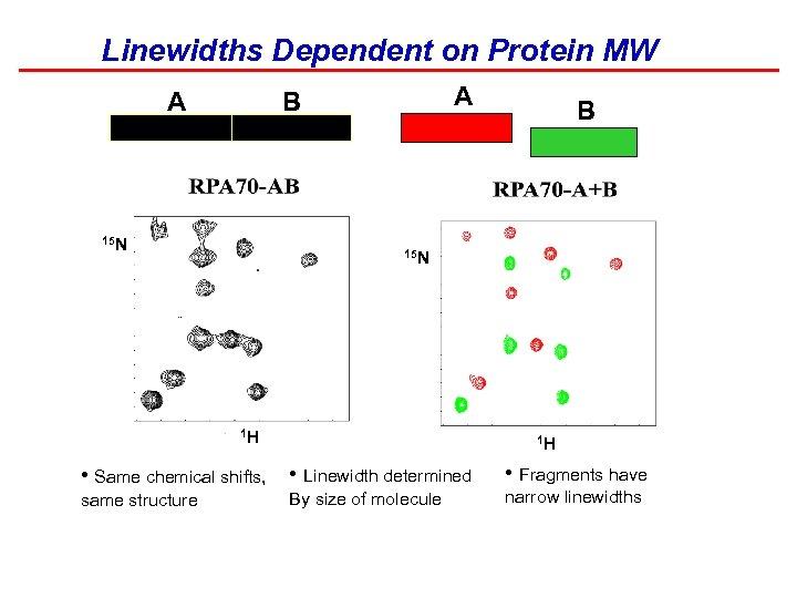 Linewidths Dependent on Protein MW A B A 15 N B 15 N 1