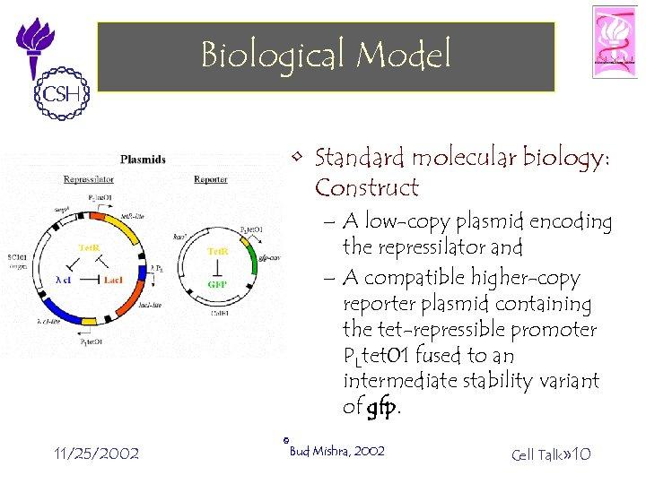 Biological Model • Standard molecular biology: Construct – A low-copy plasmid encoding the repressilator